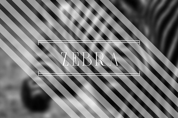 Zebrazil1